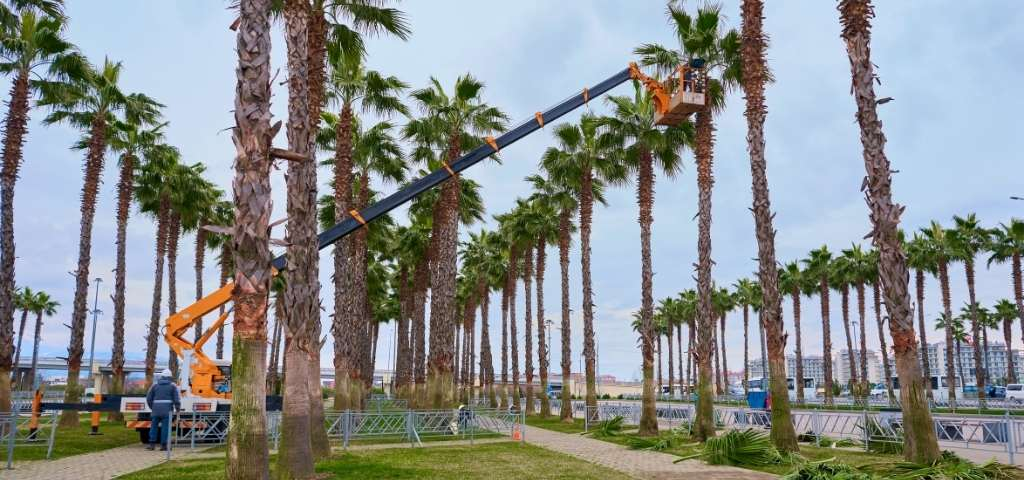 man-trimming-palm-tree
